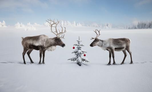 reindeer「TWO REINDEER LOOKING AT CHRISTMAS TREE」:スマホ壁紙(3)