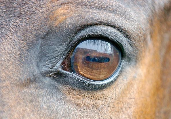 Horse「RACEHORSE EYE」:写真・画像(17)[壁紙.com]