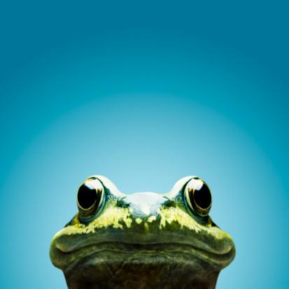 Animal Head「frog smile」:スマホ壁紙(1)
