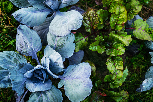 Planting「Aerial Shot Of Organic Vegetables On Farm Plot」:スマホ壁紙(0)