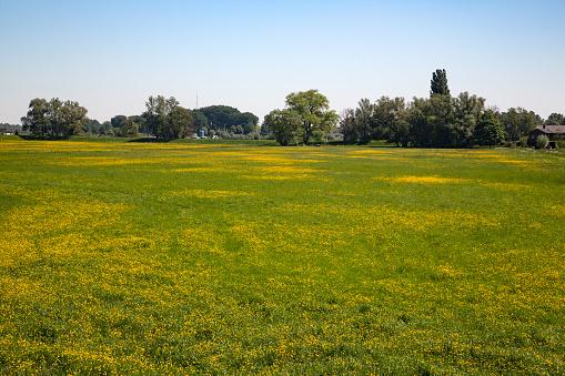 North Brabant「Flowery grassland in Biesbosch National Park」:スマホ壁紙(11)