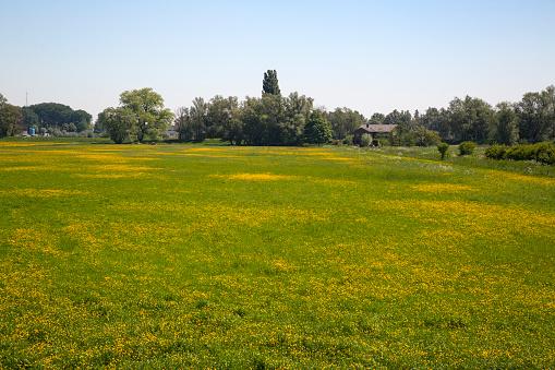 North Brabant「Flowery grassland in Biesbosch National Park」:スマホ壁紙(10)