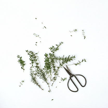 Branch - Plant Part「Sprigs of thyme with scissors」:スマホ壁紙(3)
