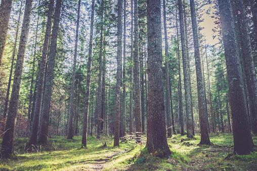 Plant Bark「Forest in Alps」:スマホ壁紙(9)