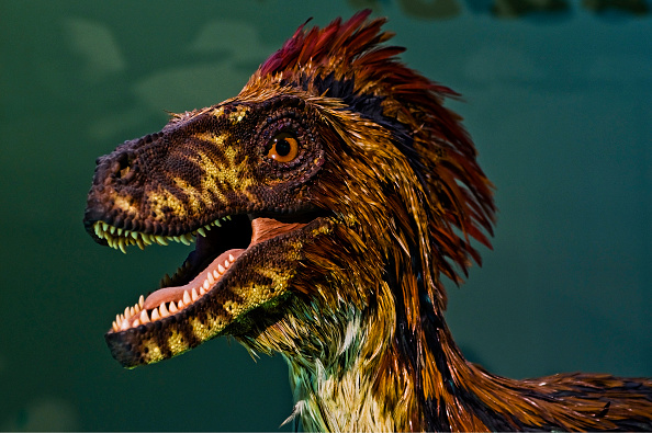 Feather「Vienna; Natural History Museum; A Model Of A Feathered Predatory Dinosaur」:写真・画像(0)[壁紙.com]