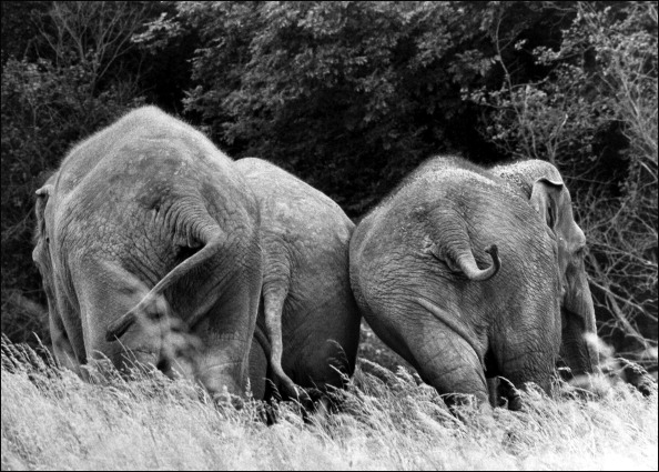 The Natural World「Elephants in Aspinall Park」:写真・画像(17)[壁紙.com]