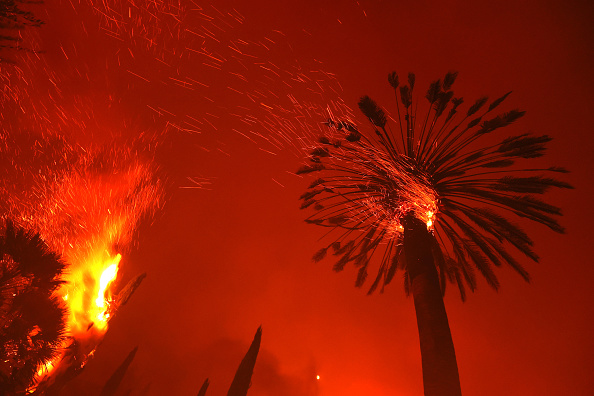 Tree「Glass Fire Burns Through Napa Valley As Hot And Dry Conditions Return To Northern California」:写真・画像(15)[壁紙.com]