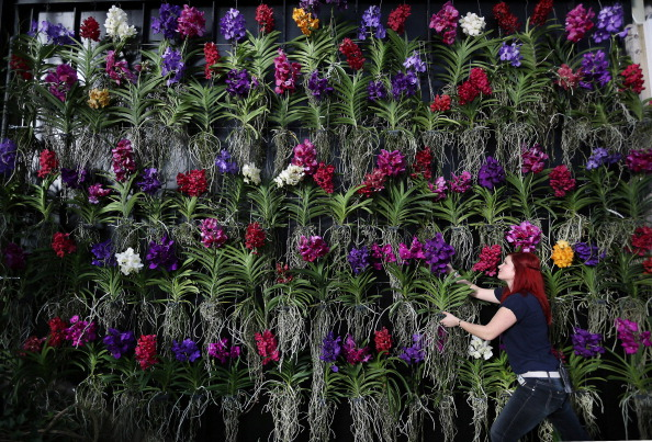 Botany「Press Preview Of Kew Gardens Orchids Exhibition」:写真・画像(4)[壁紙.com]