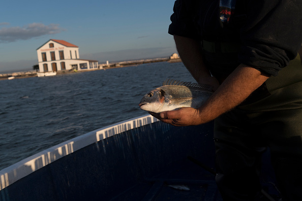 Fisherman「Mar Menor, Spain's Largest Saltwater Lagoon, Struggles With 'Ecological Unbalace'」:写真・画像(12)[壁紙.com]
