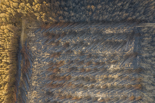 Lumber Industry「Germany, Brandenburg, Treuenbrietzen, Forest, Aerial view of slash and burn」:スマホ壁紙(16)