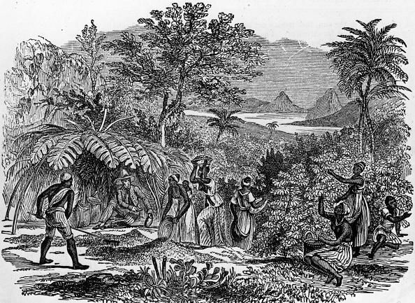 History「Coffee Harvest」:写真・画像(19)[壁紙.com]