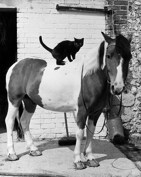 Horse「The Inseparables」:写真・画像(16)[壁紙.com]