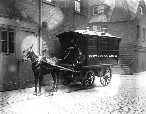 Horse「Army Ambulance」:写真・画像(9)[壁紙.com]