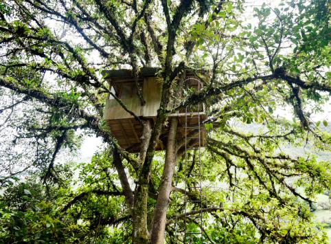 Carpentry「Tree House」:スマホ壁紙(13)