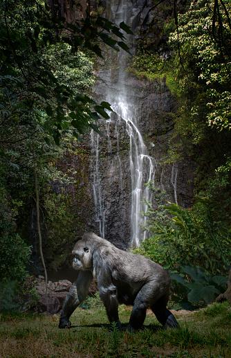Walking「Female Gorilla in Naturalistic Setting」:スマホ壁紙(6)