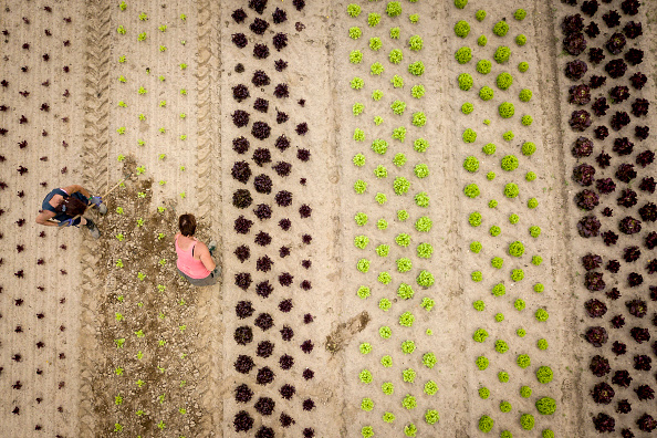 Environmental Conservation「Organic Food Production Reaches Record Level」:写真・画像(1)[壁紙.com]