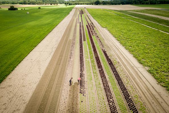 Environmental Conservation「Organic Food Production Reaches Record Level」:写真・画像(3)[壁紙.com]