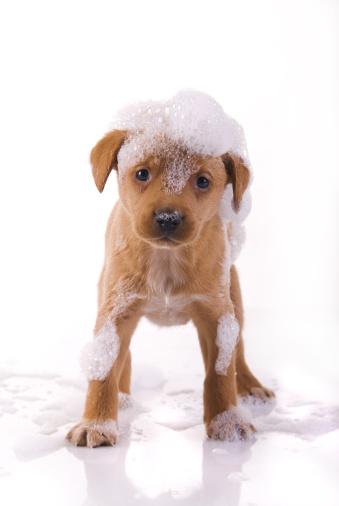 Wet「cute, wet puppy」:スマホ壁紙(17)