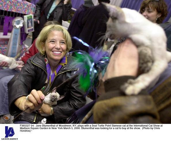 Purebred Cat「International Cat Show」:写真・画像(18)[壁紙.com]
