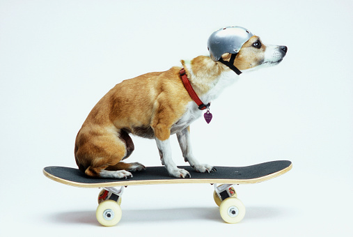 Domestic Animals「Dog with Helmet Skateboarding」:スマホ壁紙(5)