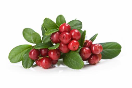 Cranberry「Cranberries on white」:スマホ壁紙(16)
