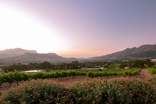 Peninsula「Franschhoek town and vineyards seen at sunset, South Africa, 2018」:スマホ壁紙(13)