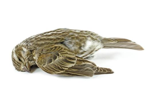 焦点「Window kill bird」:スマホ壁紙(9)