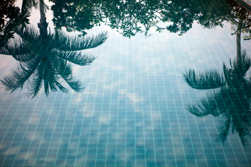 Making a Reservation「reflection of palm trees in a swimming pool」:スマホ壁紙(8)