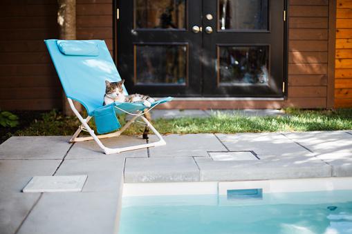 Deck Chair「A cat lying on a chair near a swimming pool」:スマホ壁紙(19)