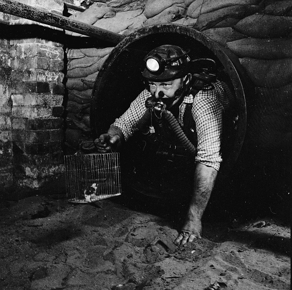 Mining - Natural Resources「Charlie's Canary」:写真・画像(11)[壁紙.com]
