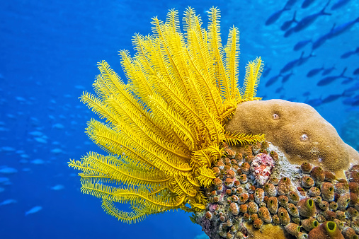 Ecosystem「Yellow Feather star ( Crinoid ) - Sea lily」:スマホ壁紙(19)