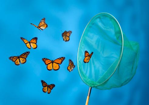 Catching「Butterfly Net Catching Butterflies」:スマホ壁紙(8)