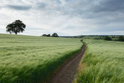 Barley「Winding path」:スマホ壁紙(5)