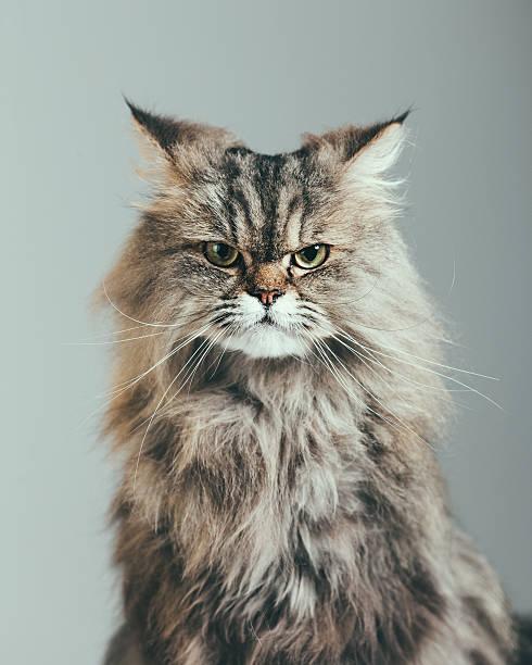 Suspicious cat portrait:スマホ壁紙(壁紙.com)