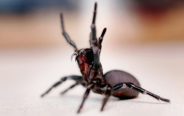 Sydney「Australia's Deadliest Animals」:写真・画像(8)[壁紙.com]