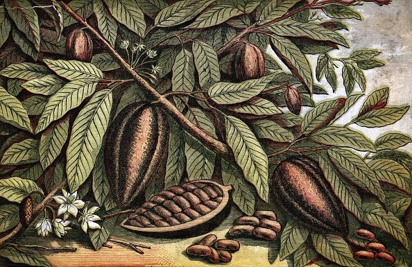 Botany「Cocoa Nut」:写真・画像(16)[壁紙.com]