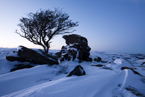 Snowdrift「Hawthorn (Crataegus monogyna) tree and rock outcrop at Saddle Tor, covered in heavy snow drift, Dartmoor, Devon, England, UK」:スマホ壁紙(4)