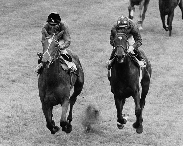 Horse「The Winning Willie」:写真・画像(3)[壁紙.com]