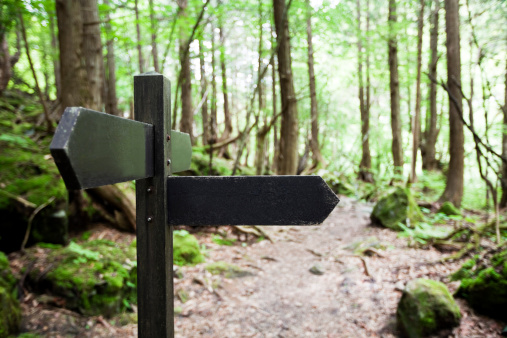 Dirt Road「Signpost in a forest」:スマホ壁紙(19)