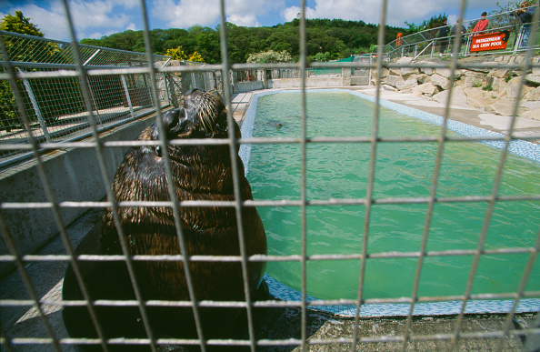 Mammal「Gweek Seal Sanctuary」:写真・画像(15)[壁紙.com]