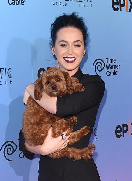 "Celebrities「Screening Of EPIX's ""Katy Perry: The Prismatic World Tour"" - Arrivals」:写真・画像(10)[壁紙.com]"