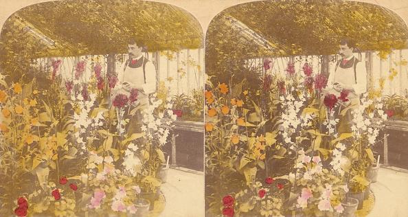 Greenhouse「Pair Of Stereograph Views Of The Royal Botanic Gardens」:写真・画像(11)[壁紙.com]