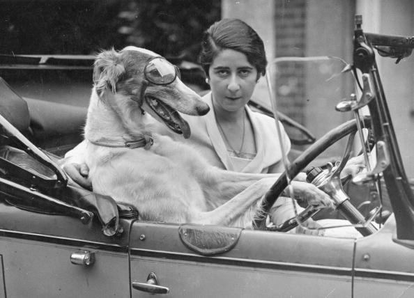 Domestic Animals「Taking The Wheel」:写真・画像(4)[壁紙.com]