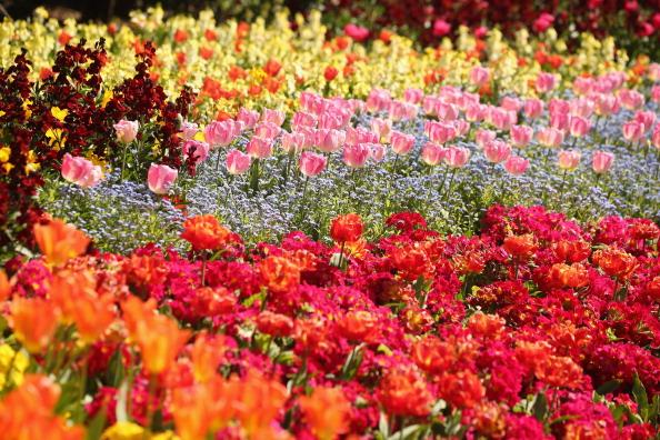 Flower「Spring Weather Finally Arrives In The UK」:写真・画像(3)[壁紙.com]