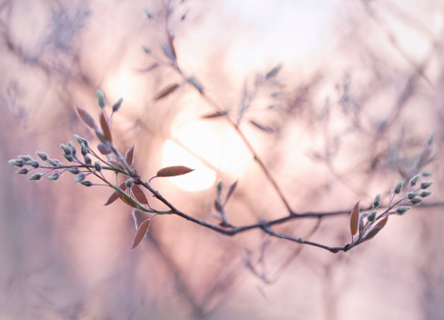 North Brabant「Sun shining through branches with dew covered buds」:スマホ壁紙(15)