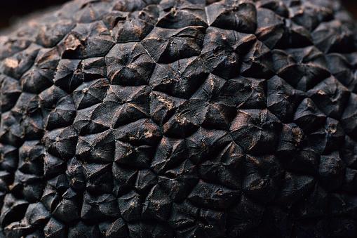 Nouvelle-Aquitaine「Tuber melanosporum (black truffle, Perigord truffle,french black truffle, Perigord black truffle)」:スマホ壁紙(7)