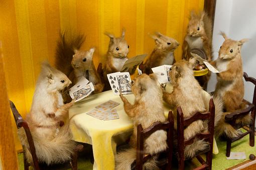 楽園「Taxidermy collection at the Little Shop of Horrors in London Hackney」:スマホ壁紙(15)