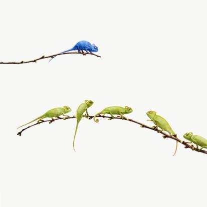 Contrasts「blue chameleon  looks at group of green chameleons」:スマホ壁紙(3)