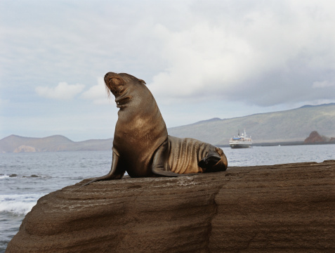 Sea Lion「Wet seal sitting atop of rock near sea」:スマホ壁紙(9)