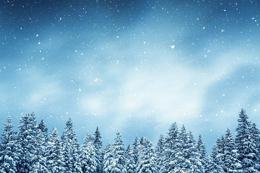 December「Winter Forest」:スマホ壁紙(13)